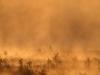 Morgonsol över myren