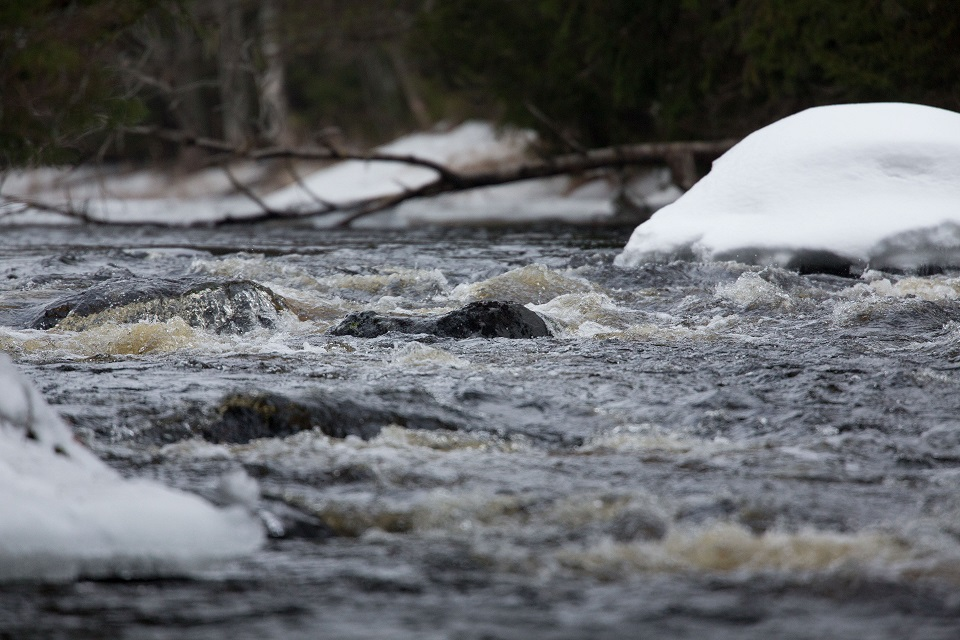 Vi forsarna är vattnet öppet för fiske