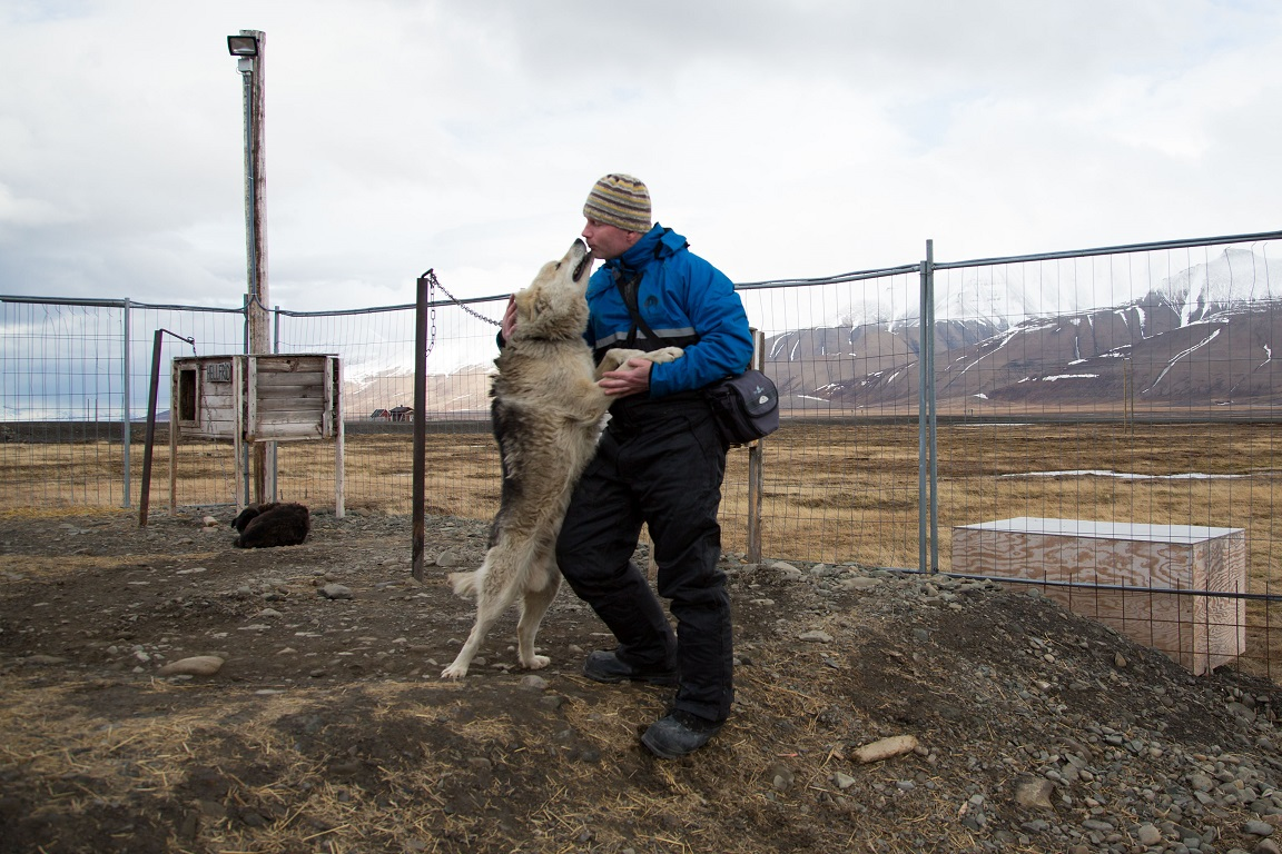 Jag med Alaskan Husky