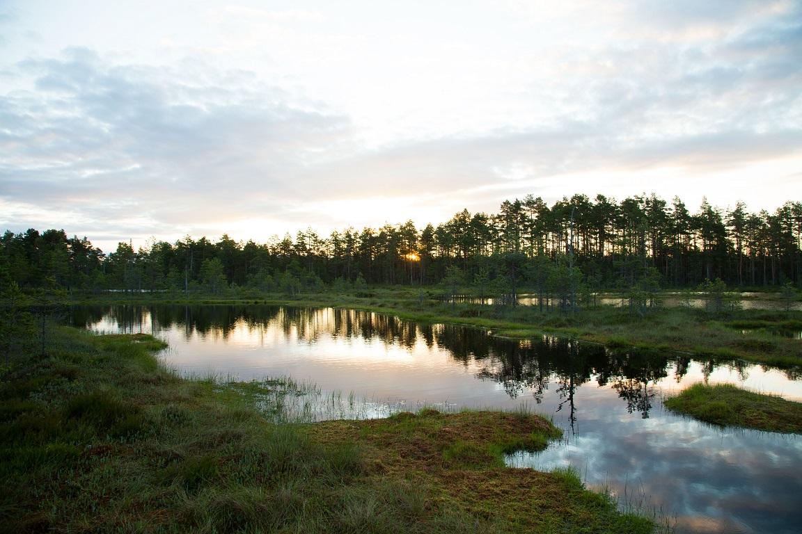 En stilla morgon på mossen