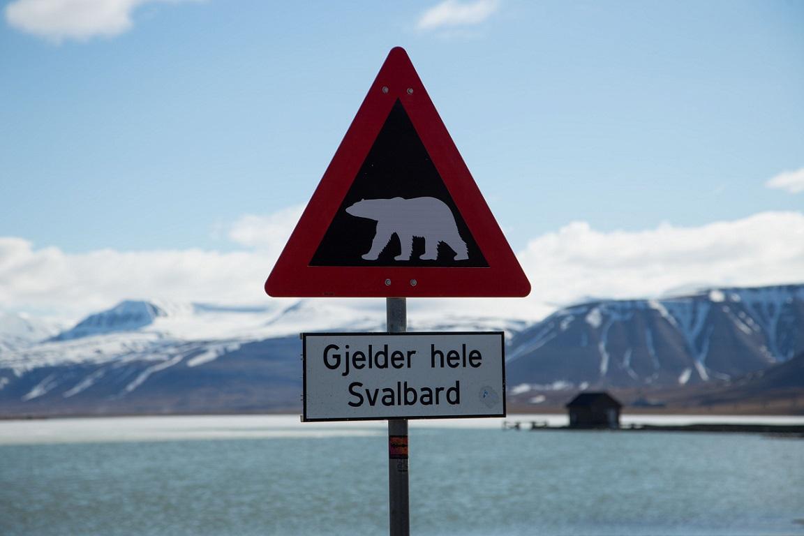 Isbjörnsvarning! Gjelder hele Svalbard