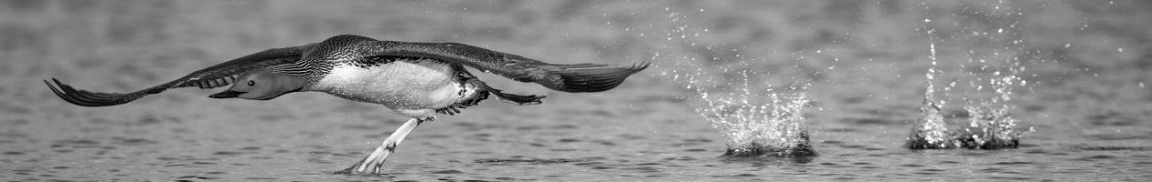 www.FISKEoFOTO.se