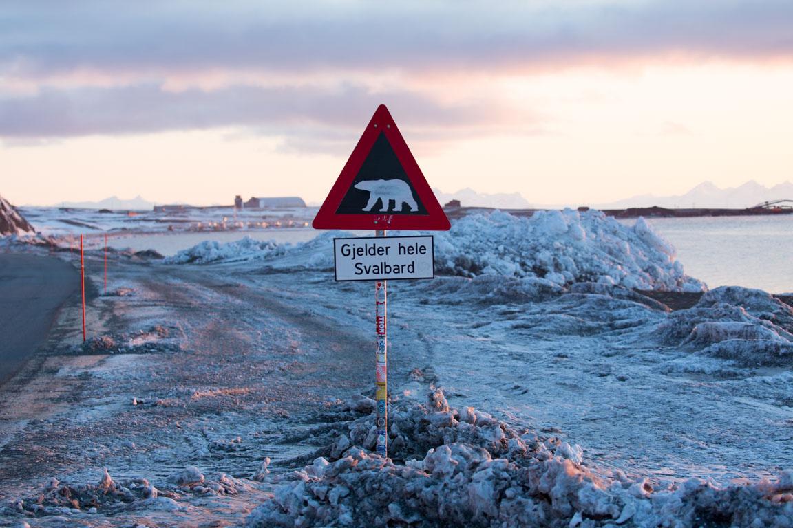 Isbjörnsvarning