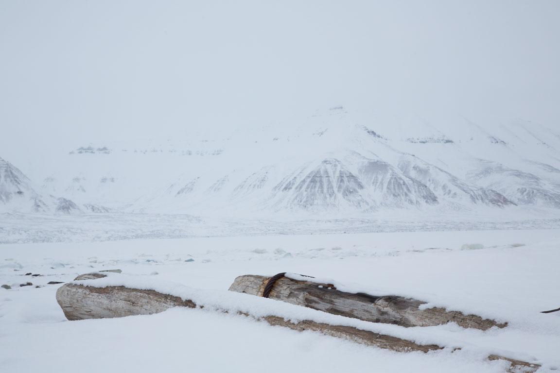 Drivved långt inne i fjorden