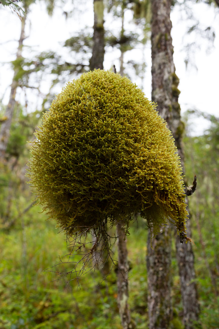 Mossklump