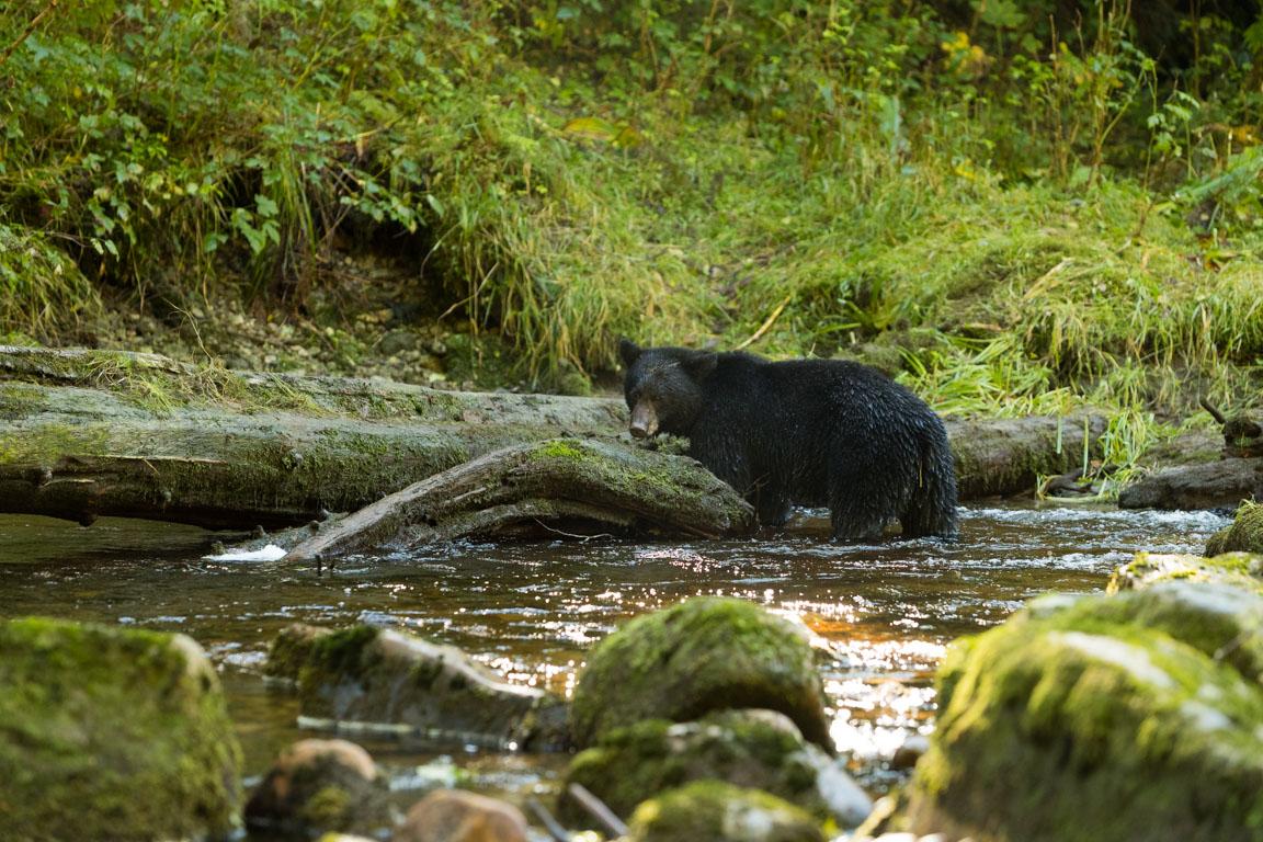 Det luktar björn