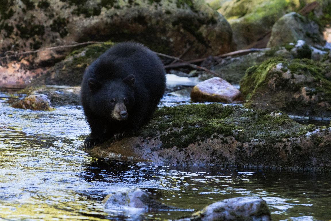 Söt björnunge