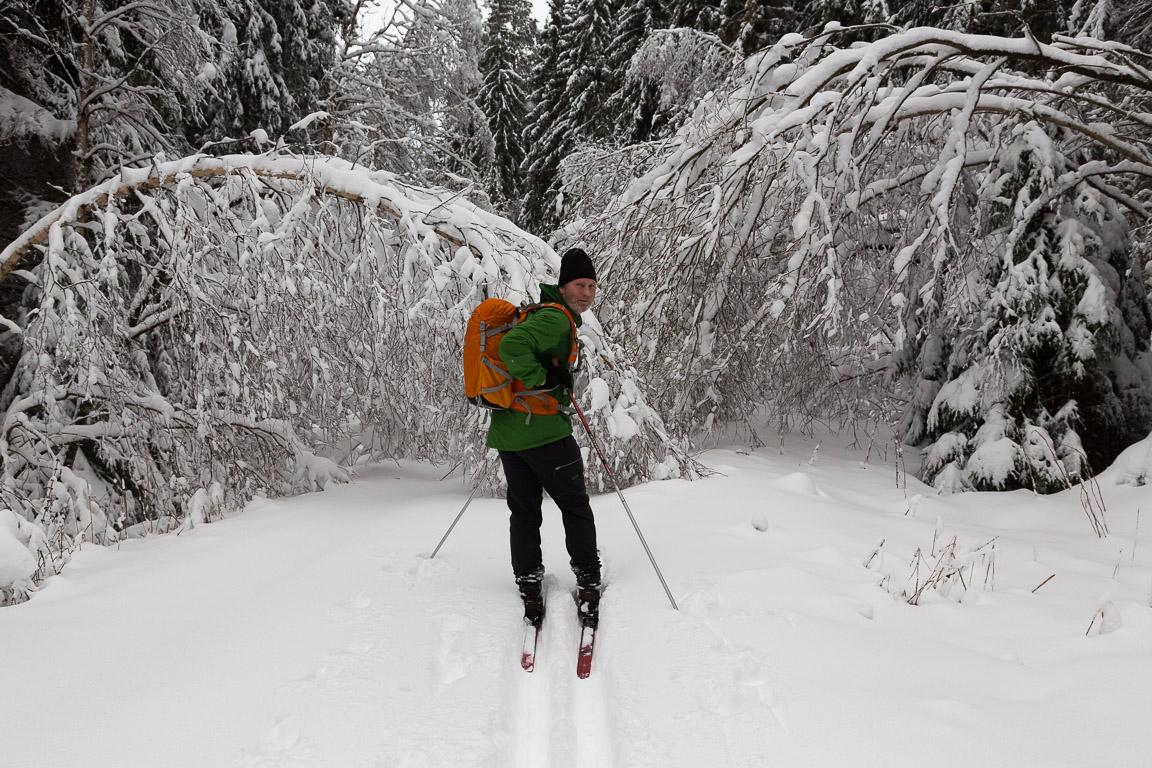 Snötyngda träd och grenar