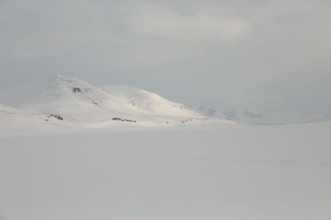 Svalbards vidder