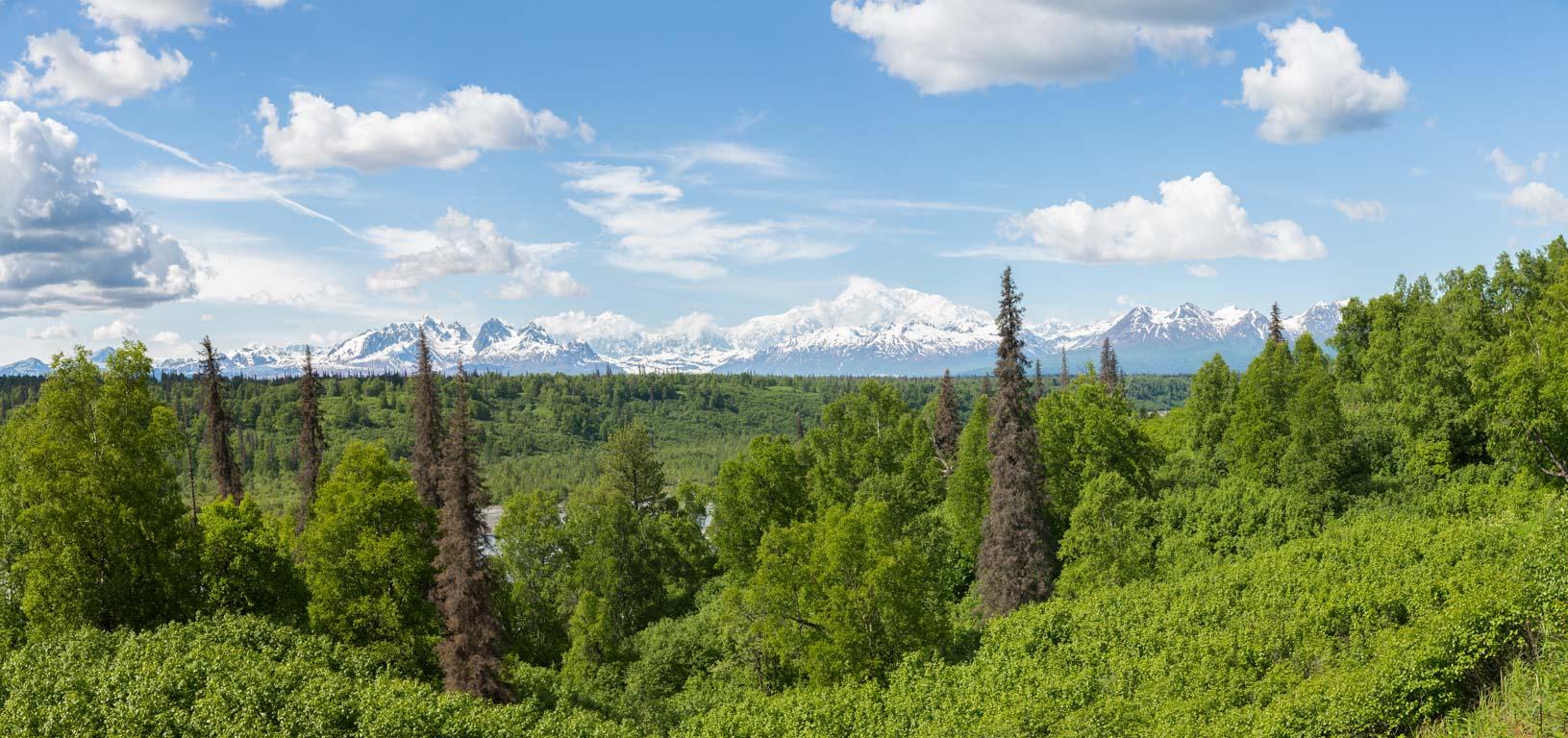 Denali South Viewpoint
