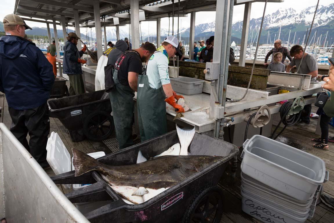 Fiskrensning och ivriga kunder