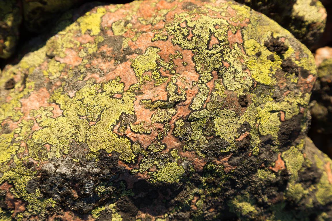 Kartlav, Rhizocarpon geographicum