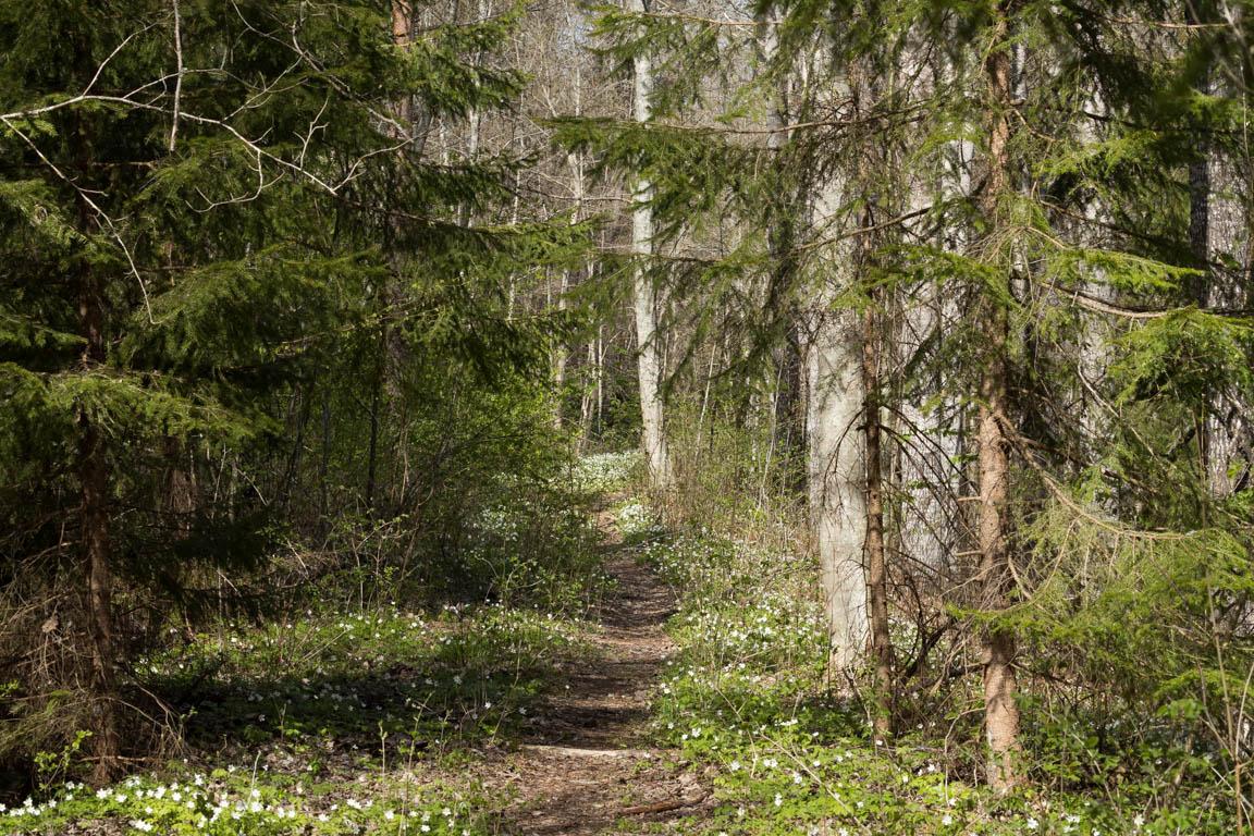 Vacker stig