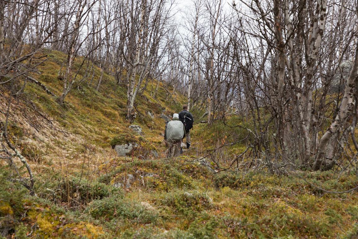 Fjällbjörkskog