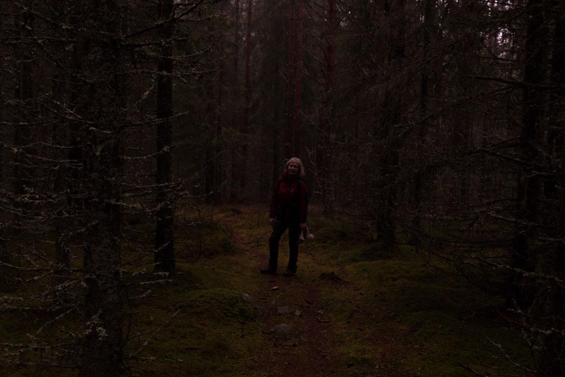 Mörka skogar