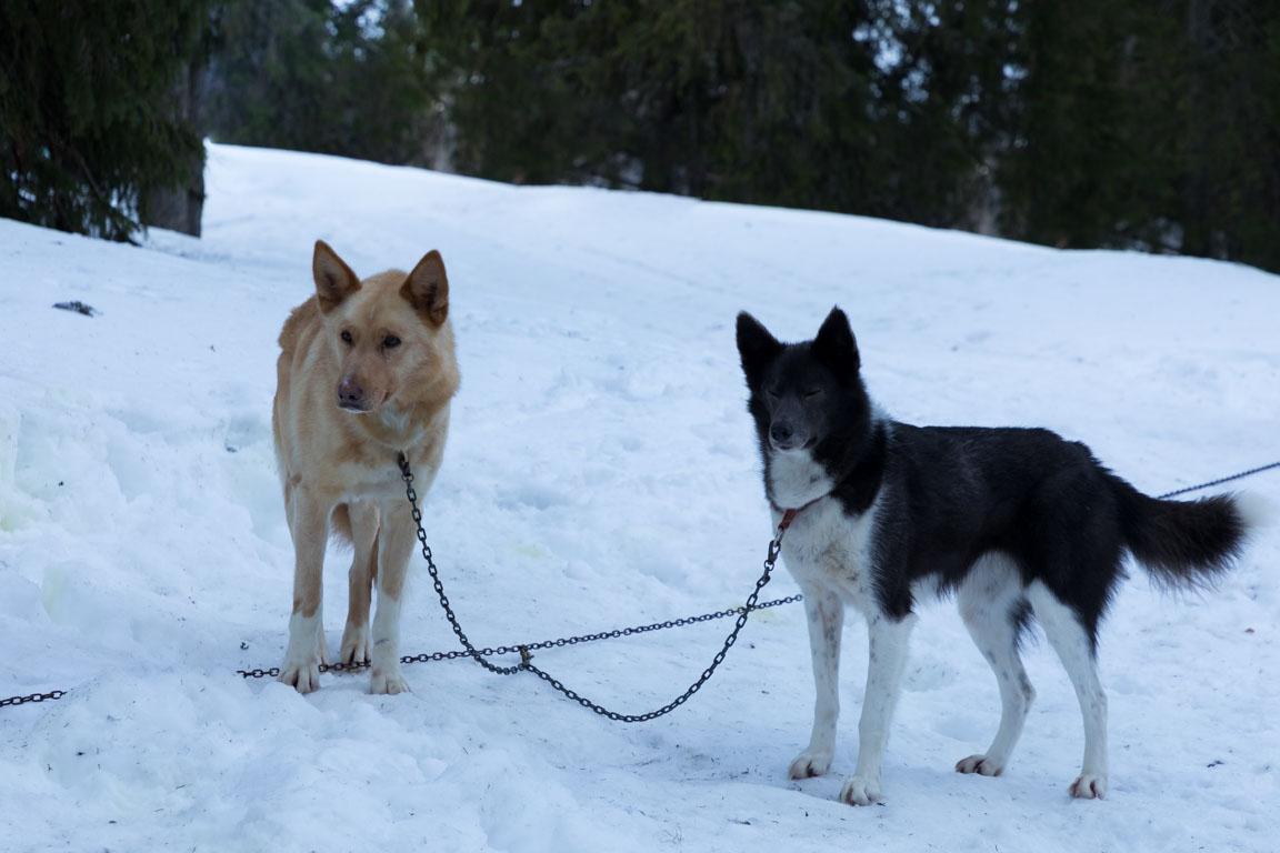 Nicke och Norih