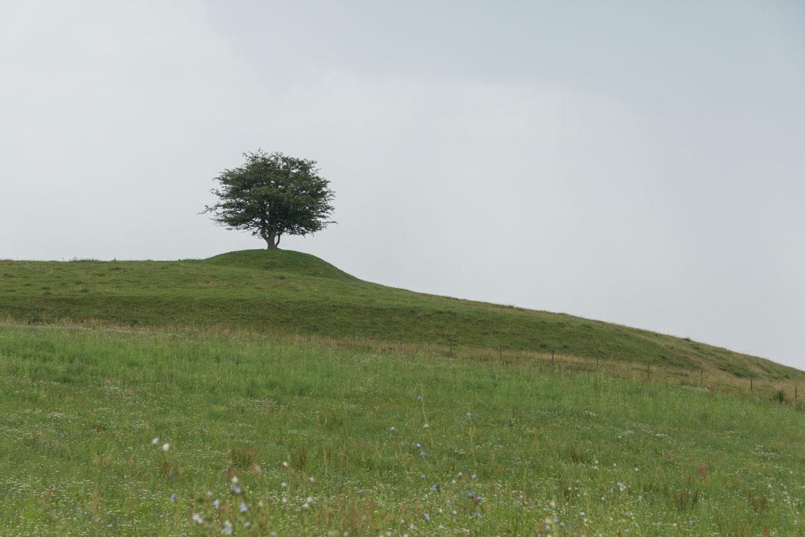 Trädet på kullen